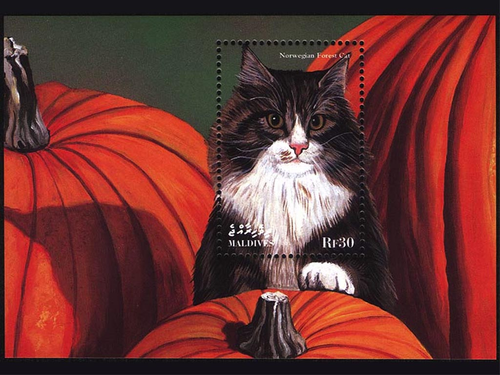 Norwegian Forest Cat Stamp wallpaper