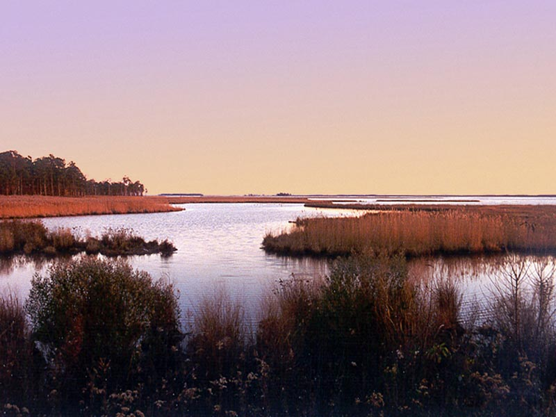 BlackWater National Wildlife Refuge Marsh wallpaper