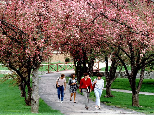Ohio Wesleyan University<br />Spring Campus Walk wallpaper